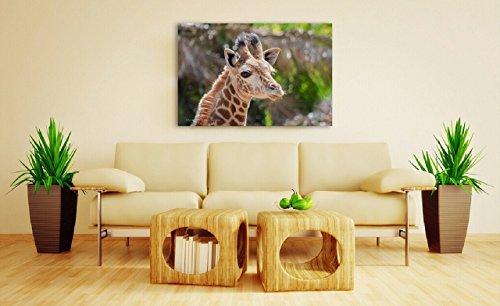 Newborn Animal Art Print on CANVAS Giraffe Photo Safari Nursery Wall Decor Baby Shower Gift Sweet Portrait Photography Ready to Hang 8x10 8x12 11x14 12x18 16x20 16x24 20x30 24x36 by Nancy J's Photo Creations