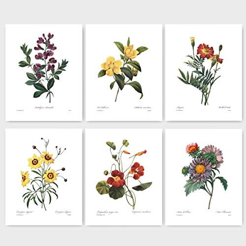 Multi Daisy Flower - (Set of 6) Botanical Prints (Redoute Flower Wall Art, Autumn Room Decor) Asters, Sweet Pea, Daisy, Marigold - 8x10 Unframed