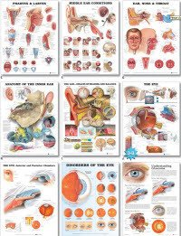 Anatomical Chart Company 1587794217 Chart Understand Hypertension 20