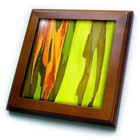 - 3dRose Danita Delimont - Natural Patterns - Rainbow Eucalyptus bark, Island of Kauai, Hawaii, USA - 8x8 Framed Tile (ft_314812_1)