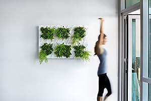 Edelwhite: Living Wall Planter