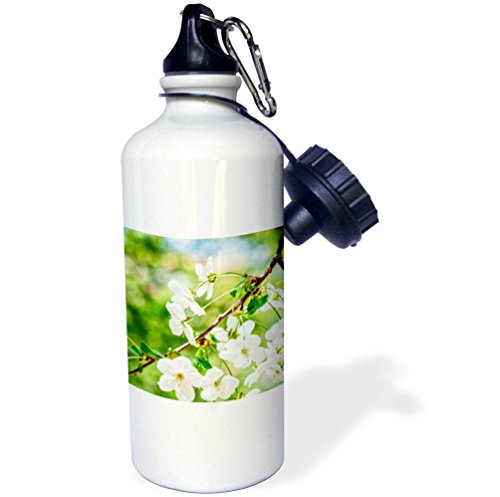 3dRose Alexis Photography - Flowers Cherry - Beautiful cheerful cherry blossoms, green, blue, beige background - 21 oz Sports Water Bottle (wb_271723_1) Cheerful Blossoms