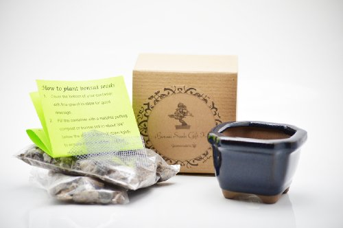Set of 2 Chinese Blue Wisteria Bonsai Seed Kit- Gift - Complete Kit by 9GreenBox.com (Image #3)