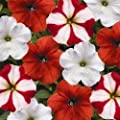 Hurrah Peppermint Stick Mix Petunia Flower Seed Pack 100 Stratisfied Seeds