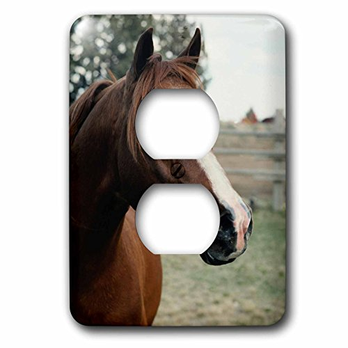 3dRose TDSwhite – Horse Equine Photos - Arabian Horse Pasture - Light Switch Covers - 2 plug outlet cover (lsp_285452_6) by 3dRose