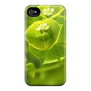 Iphone 6 Hard Back With Bumper Cases Covers Wood Spurge European Plant