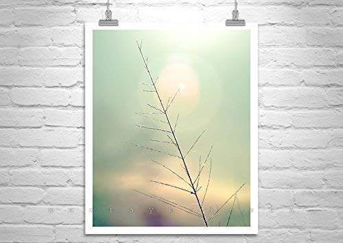 Minimalist Nature Print, Fine Art Photography