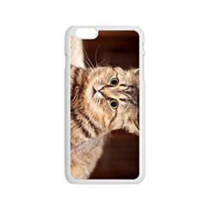 The Glaring Cat Hight Quality Plastic Case for Iphone 6
