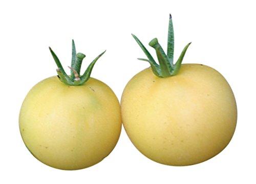 Organic Tomato Seeds 25 seeds (Peach Tomato)