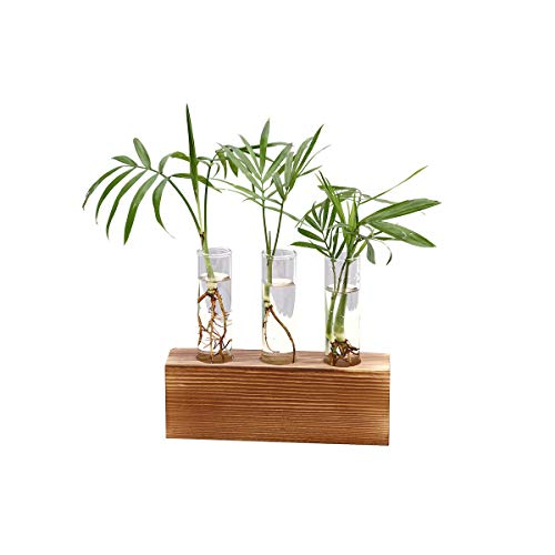 (HP95 Creative Glass Bulb Vase for Home & Office - Wall Hanging Test Tube Planter Modern Flower Bud Vase with Wood Stand Tabletop Glass Terrarium for Propagating Hydroponics Plants)