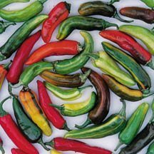 David's Garden Seeds Pepper Hot Fish D46518 (Multi) 50 Heirloom Seeds