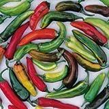 David's Garden Seeds Pepper Hot Fish SV46518 (Multi) 25 Heirloom Seeds