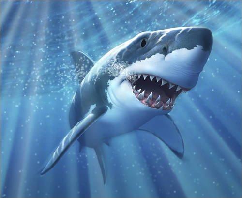 Acrylglasbild 110 x 90 cm: A Great White Shark with sunrays just below the surface. von Jerry LoFaro / Stocktrek Images