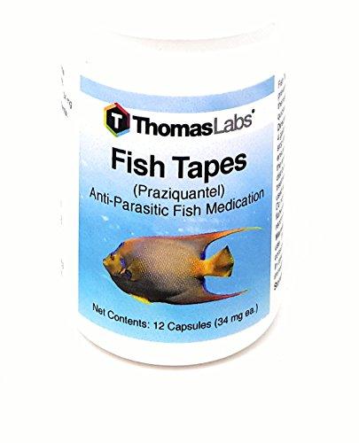 thomas labs fish - 8