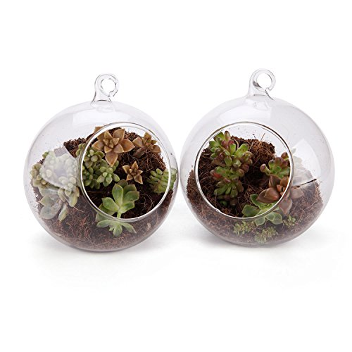 T4U 4 Inch Glass Hanging Plant Terrariums Air Plant Pot Container Home Office Wedding Decoration Votive Holder Sucuulent Cacti Plant Pots - Pack of 2