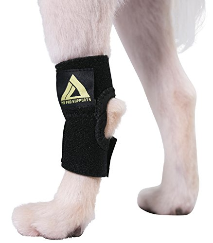 Rear Leg Splint - 8