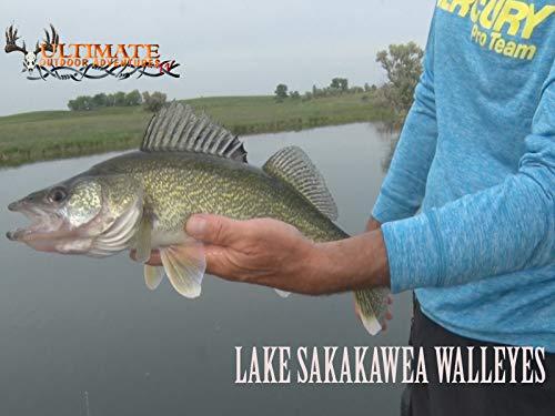 Lake Sakakawea Walleyes