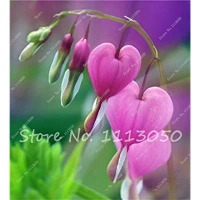 Kasuki 100Pcs Lily of The Valley Flower Bonsai, Bell Orchid Flower,Rich Aroma,Bonsai Flower Rhizome,Indoor Plant Look Like Love Heart - (Color: 13): Garden & Outdoor
