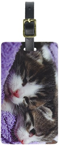 Graphics & More Kittens-Kitty Cats Luggage Tags Suitcase Carry-on Id, White