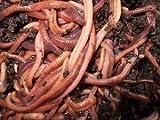 African Nightcrawler Starter Mix Eggs Baby Worms + Night Crawler Grow Guide