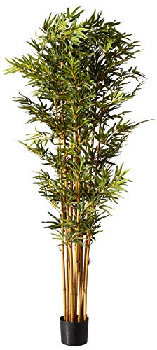 (Nearly Natural 5188 Curved Bamboo Silk Tree, 6-Feet, Green)