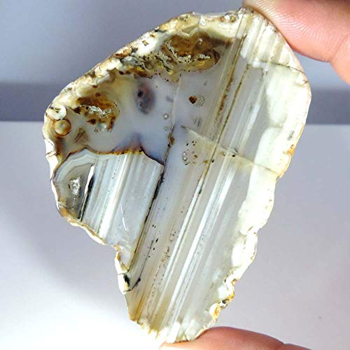 GEMSCREATIONS Natural Rough Montana Agate for Cutting, Lapidary, SLABS,Crafts, Display