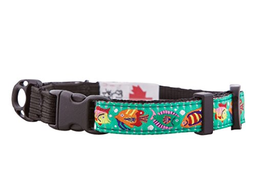 (RC Pet Products 1/2-Inch Kitty Clip Cat Collar, 8 by 10-Inch, Tropical Fishes)