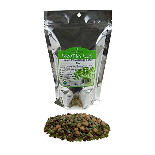 Adzuki Sprouting Seed (Protein Powerhouse Sprouting Seed Mix: 1 Lb - Organic, Non-GMO - Sprouting Sprouts, Food Storage. High Protien Sprouts - Pea, Mung, Green Pea, Adzuki)