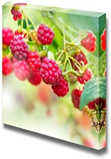Raspberry Growing Organic Berries Fresh Fruits Wall Decor
