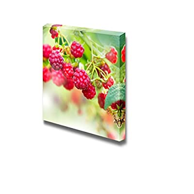 Canvas Prints Wall Art - Raspberry Growing Organic Berries Fresh Fruits | Modern Wall Decor/Home Decoration Stretched Gallery Canvas Wrap Giclee Print & Ready to Hang - 12