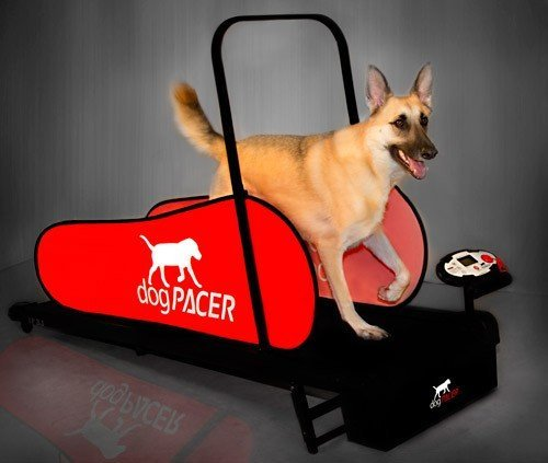 dogPACER LF 3.1 Folding Fitness Dog Treadmill For Dogs Up to 179 lbs...