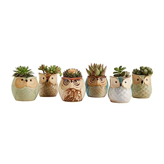Sun-E 2.5 Inch Owl Pot Ceramic Flowing Glaze Base Serial Set Succulent Plant Pot Cactus Plant Pot Flower Pot Container Planter Bonsai Pots with A Hole Perfect Gift Idea 6 in Set 2 New SUN-E collections!OWL OWL OWL!!!Ideal for adding a dash of refreshingly modern design to your home,Great Gift - this ceramic pot can serve a variety of purposes. Perfect gift for family and friends who love succulent plants with a green thumb or keep it in your own home for a touch of clean, modern style in your living space. Material:Ceramic(Made of top-quality clay and baked in high temperatures);Package content:6pcs*Pot. Approximate Size: 2.2 x 2.2 x 2.4 inch (L x W x H).