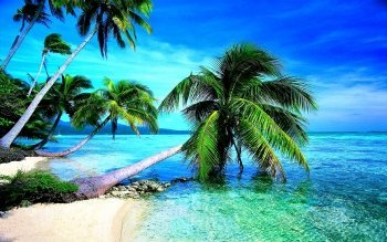 WiHome 5D Diamond Painting Kits for Adults Full Drill Palm Tree Sea Tropical Embroidery Rhinestone - Tropical Tree Diamond Palm