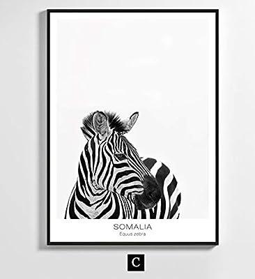Black And White Portrait Of A Zebra Art Print Home Decor Wall Art Poster C