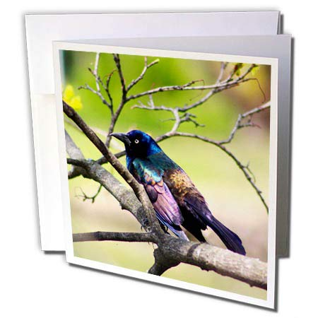 3dRose Stamp City - Birds - Photograph of a Colorful Common Grackle Sitting Among The Branches. - 6 Greeting Cards with envelopes (gc_291284_1)