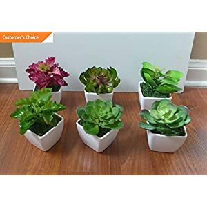 Hebel Mini Potted Artificial Unkillable Succulents Plants with Pot | Model ARTFCL - 546 | 75