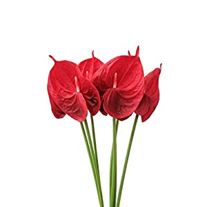 Real Touch Latex Artificial Tropical Anthurium Lily Flowers for Home Decor (Pack of 6) (Red) 45