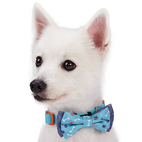 Blueberry Pet Spring Gift Box with Pack of 2 Handmade Bow Tie, Go for Fun Designer Bowtie Set, Pet Bows Accessories for Dogs & Cats
