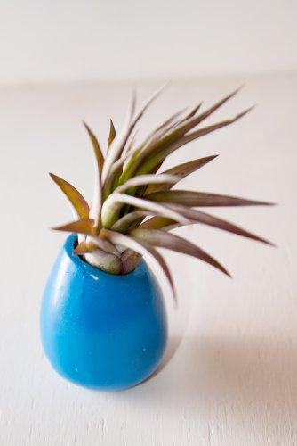 Hinterland Trading Plant Velutina Ceramic