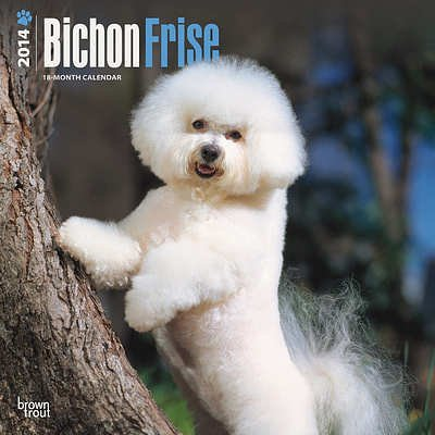 Bichon Frise - 2014 Calendar - 18 month