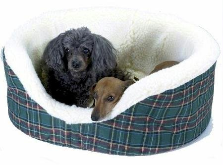 Snoozer Pet Couch, XX-Large, Azure Pld, My Pet Supplies