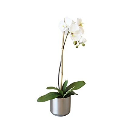 Amazon Meda Blooms Artificial White Phalaenopsis Orchids