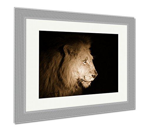 Ashley Framed Prints Lion At Night, Wall Art Home Decoration, Sepia, 34x40 (frame size), Silver Frame, - Panthera Ebony