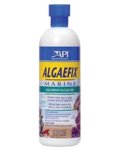 api-algaefix-marine-16-ounce