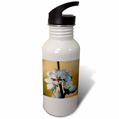 3dRose Alexis Photography - Flowers Sakura Beautiful - Closeup view of Japanese apricot flowers against the brown background - Flip Straw 21oz Water Bottle (wb_286679_2) by 3dRose