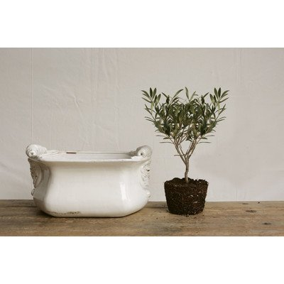 Bistro Novelty Pot Planter by Creative Co-op