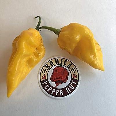 Devil's Tongue Yellow - Seeds : Garden & Outdoor