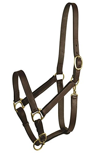 - GATSBY LEATHER COMPANY 283460 Leather Halter Havanna Brown, Weanling
