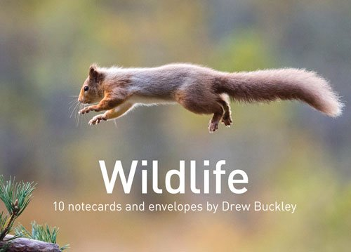 Wildlife by Drew Buckley Notecards: 10 cards and envelopes