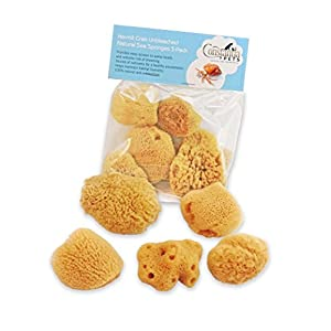 Hermit Crab Natural Sea Sponges - 5 Pack Unbleached, Provides Nutrients, Safer Drinking and Helps Maintain Habitat Tank Humidity by Constantia Pets 103